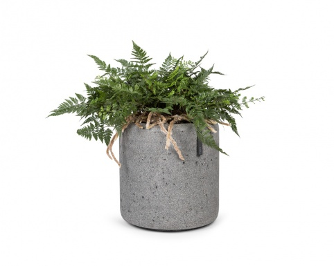 Asparagus in round ficonstone pot